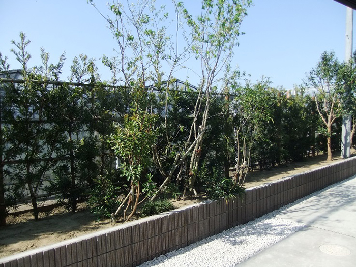 裏庭の外構の硬さを植栽で和らげる