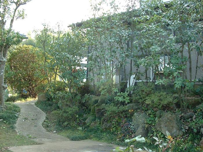 鳥海石の石積みとシラカシ植栽(10年経過)